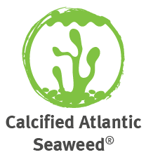 Calcified atlantic seaweed